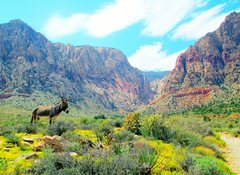 Rock Climbing Photo: Our enchanted desert. : )  A burro calmly stands a...