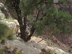 Rock Climbing Photo: rap tree at top of P4, P5 starts here w/ a short s...