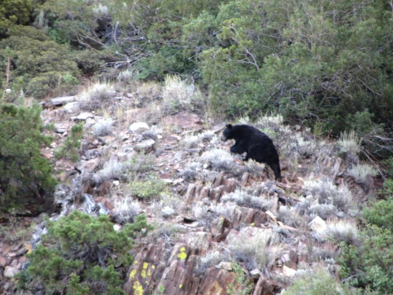 Rock Climbing Photo: bear on feather peak approach