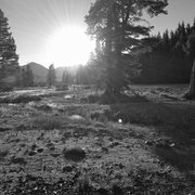Rock Climbing Photo: Morning in Tuolumne Meadows