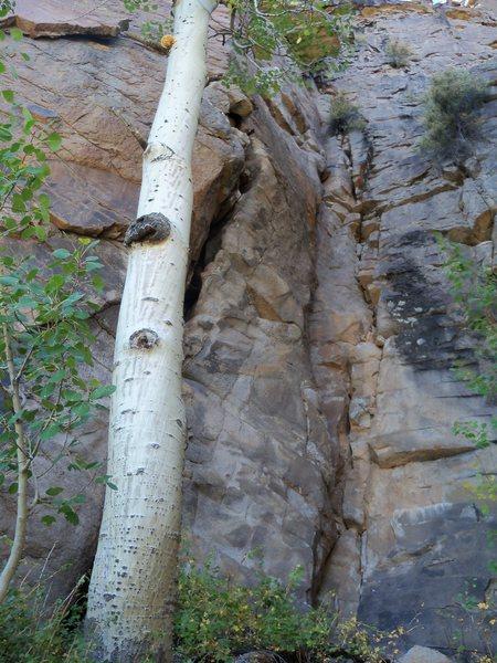 Rock Climbing Photo: Easy 5.6 start