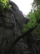 Rock Climbing Photo: Aptly named, Devil Tree.