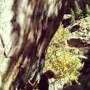 Rock Climbing Photo: On the send.  I know it's a crappy pic, it is a st...