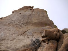 Rock Climbing Photo: Looking straight up from the base of What's My Lin...