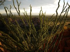 Rock Climbing Photo: Amazing ocotillo at Trad Rock.