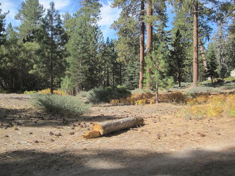 """Here's the """"trailhead"""" on the sw side of 2N86 (opposite Yellow Post 30 CG). Pass the right side of the log and head through the trees to intersect with the old dirt road."""