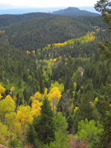 A river of aspens during September at the Wipeyur Buttress.