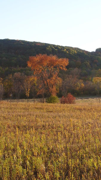 Lone tree in fall color. Rozno's Meadow DL 10-07-12.