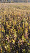 Rock Climbing Photo: Prairie plants in fall, Rozno's Meadow DL 2012.