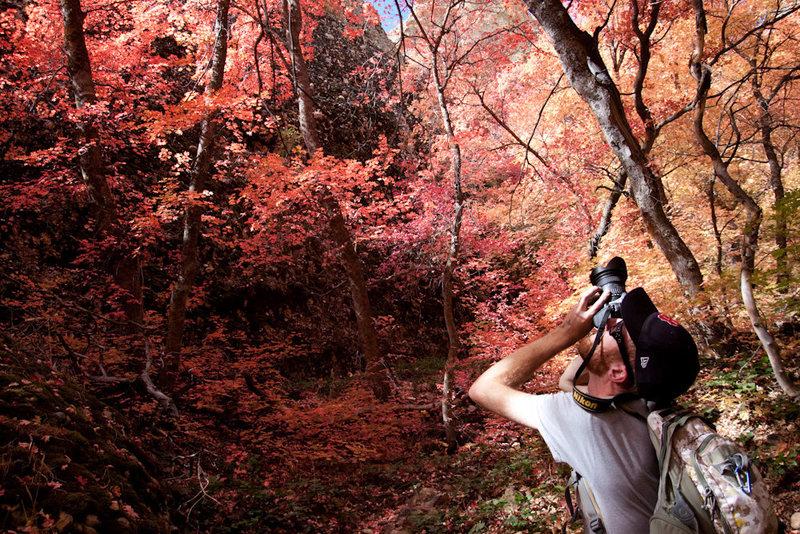 Fall colors in Maple<br> <br> www.dcranephoto.com
