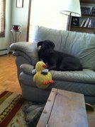 Rock Climbing Photo: Ziggy love Ducky!  A year-and-a-half old and still...