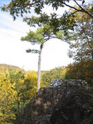 Rock Climbing Photo: The wall and the pine