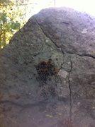Rock Climbing Photo: Sapling Left.