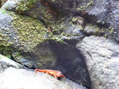 Rock Climbing Photo: newt.