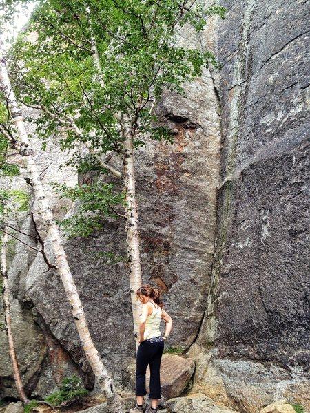 Rock Climbing Photo: Mr. Clean; Barkeater Cliff, Keene