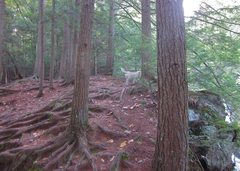 Rock Climbing Photo: Tree anchors