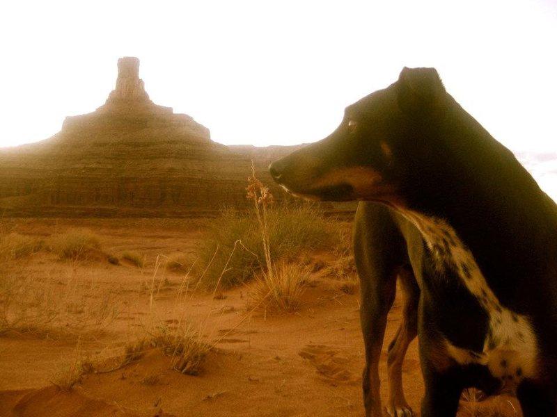 Desert Dawg
