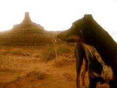 Rock Climbing Photo: Desert Dawg