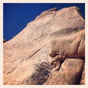 Rock Climbing Photo: Cochise Dome.