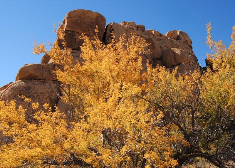 Rock Climbing Photo: Fall color near Echo Rock. Photo by Blitzo.