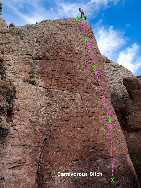 Rock Climbing Photo: Carnivorous Bitch!