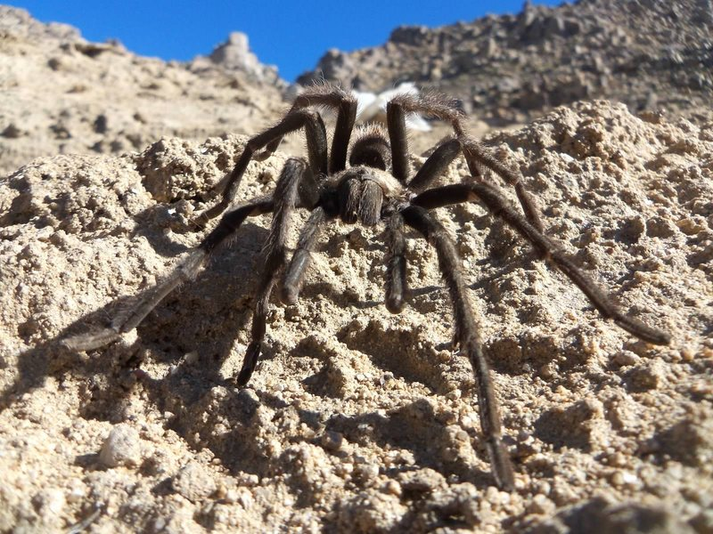 A little Desert wildlife out in the Apple Valley Crags. PHOTO BY: Rusty Gibson
