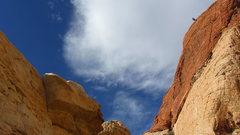 Rock Climbing Photo: High on Man's Best Friend
