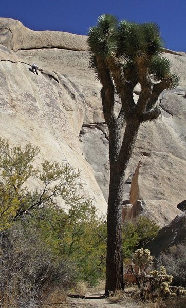 Rock Climbing Photo: Near the top of 'stick to what' - a great climb.  ...