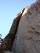 Rock Climbing Photo: Joshua Tree, Buissonier