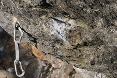 Rock Climbing Photo: the dead point hold...