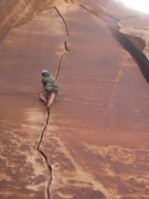 Rock Climbing Photo: Blue Spruce