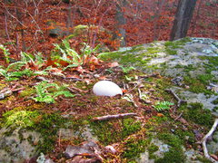 Rock Climbing Photo: Look what I found on top of this boulder!