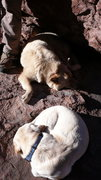 Rock Climbing Photo: Isis and Faith enjoying the dogs life at Godhead N...