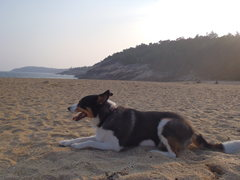 Rock Climbing Photo: Ally Wally on the beach in Maine.....