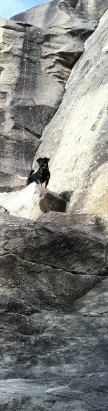 Rock Climbing Photo: The dog.