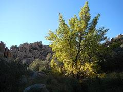 Rock Climbing Photo: Desert oasis in the north Wonderland