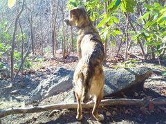 Rock Climbing Photo: Layla the crag dog.