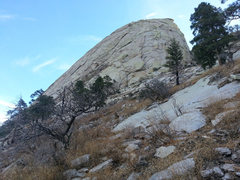 Rock Climbing Photo: WSW face.  Flea Tree easily visible.