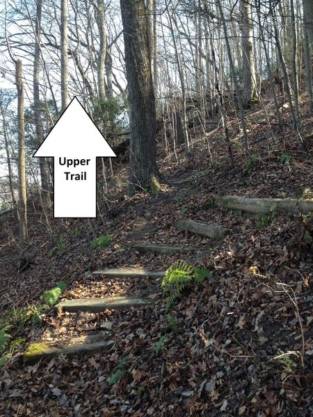 Don't follow the Loop Trail up the stairs; instead stay straight and walk to the right of the large tree to find the Upper Access Trail.