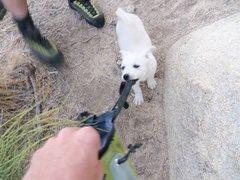 Rock Climbing Photo: Bear ate my chalk bag!