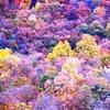 Fall Colors at Seneca Rock, WV