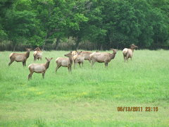 Rock Climbing Photo: ozark elk