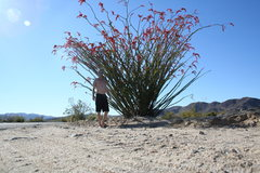 Rock Climbing Photo: ocotillo patch jt ca