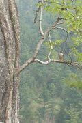 Rock Climbing Photo: perigrin