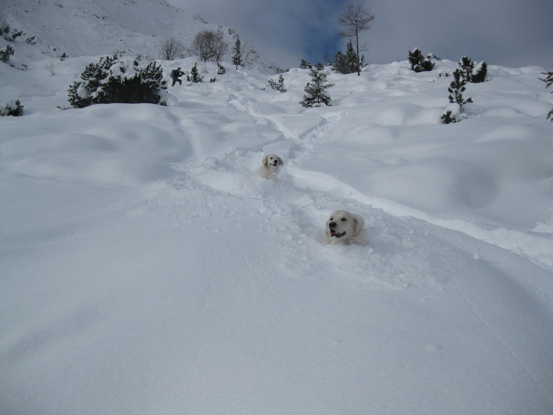 Powder hounds