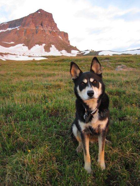 Jack at Uncompahgre Peak
