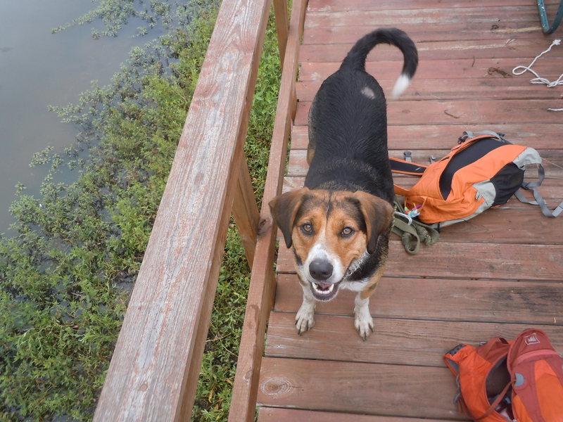 Rock Climbing Photo: Layla chillin on the dock