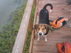 Layla chillin on the dock