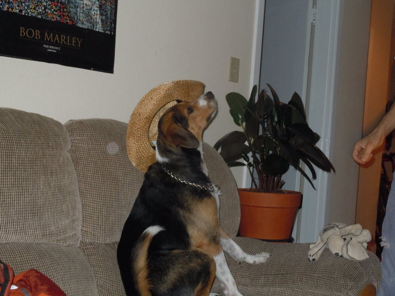 Layla in my summer hat<br>