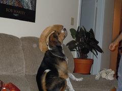 Rock Climbing Photo: Layla in my summer hat